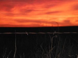<p>A beautful sinrise on November.  The morings out on the plains hunting can be very breath taking, full of color.</p>